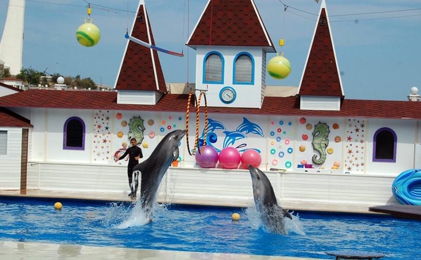 дельфинарий Севастополя