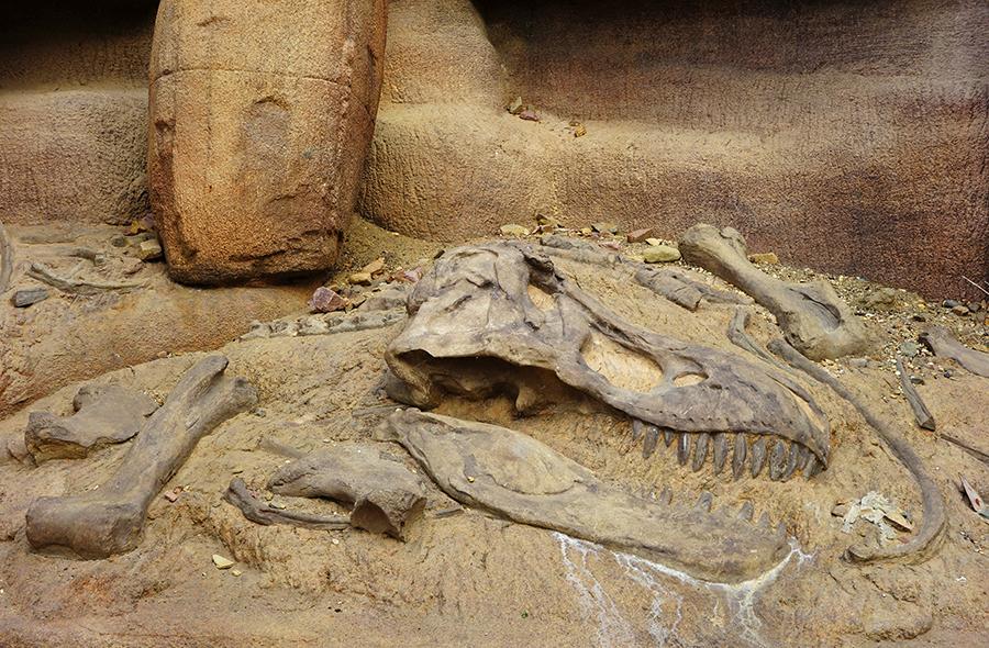Археологические раскопки в пустыне Гоби