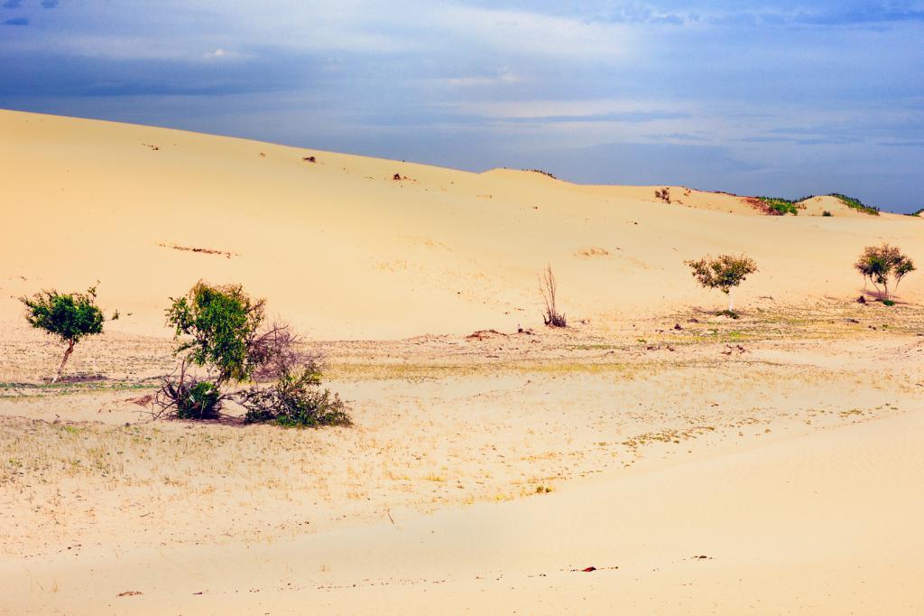 Очаровательная пустыня Гоби