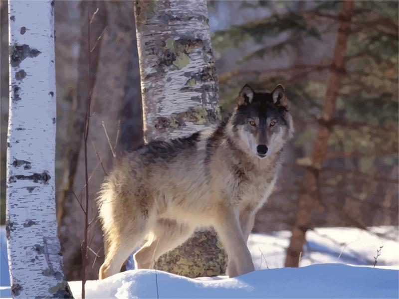 волки что едят