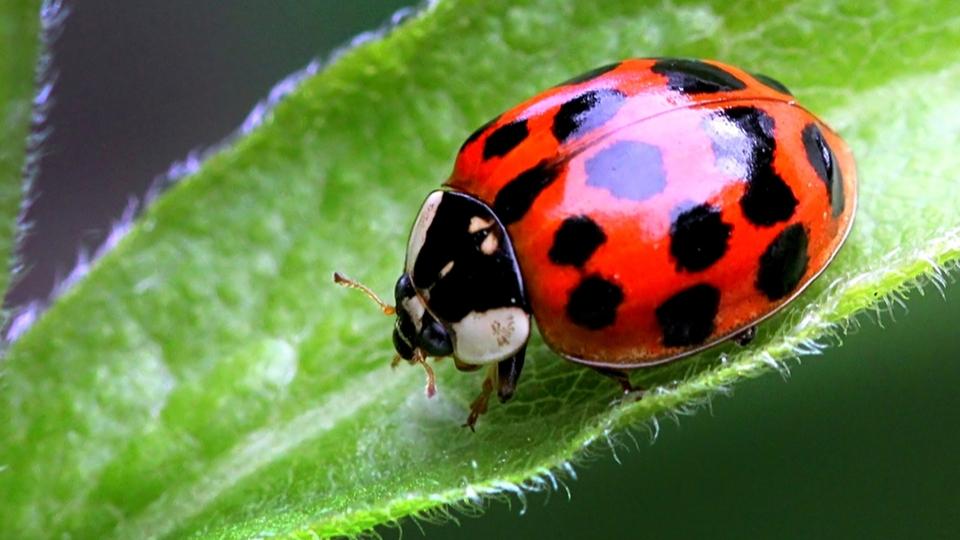 Яркое насекомое