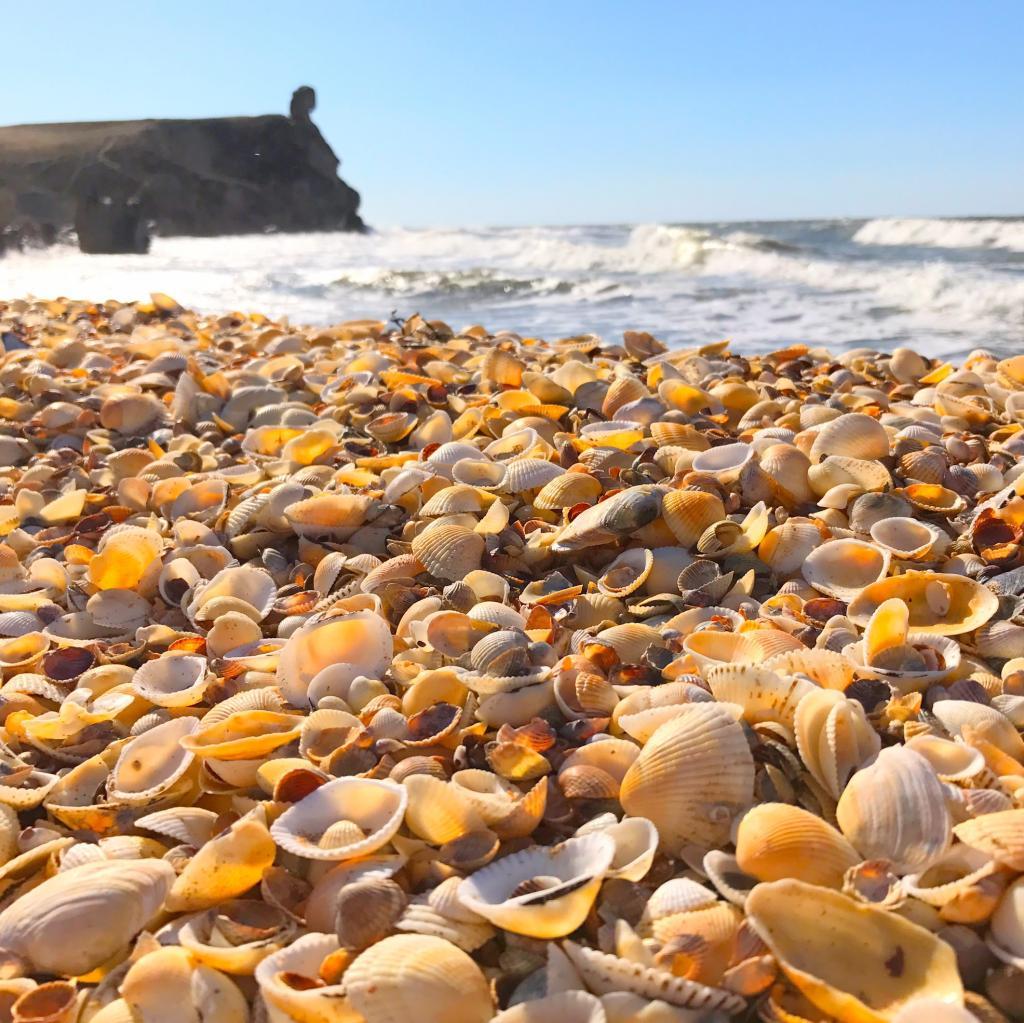 Отдых на побережье моря картинки